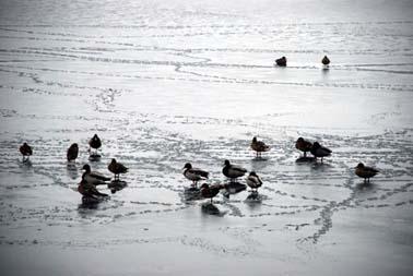 Abant Gölü dondu! galerisi resim 2