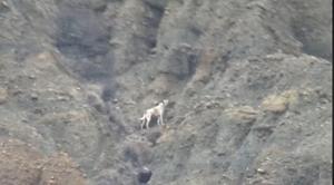 Çankırı'da 6 gündür kanyonda mahsur kalan köpek kendi kendini kurtarmış!
