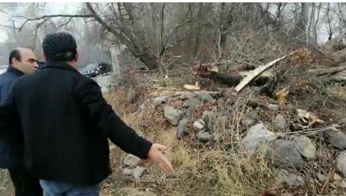 Yaylakent Belediyesi'nden ağaç katliamı!