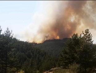 Son dakika... Yapraklı'da orman yangını