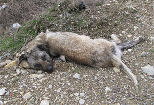 Anlaşılan o ki, Çankırıda köpeklere rahat yok!