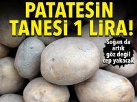 Patatesin kilosu 6 liraya çıktı, soğan 6.5 lira!