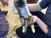 Çankırı'nın kedisi sosyal medyada günün olayı oldu