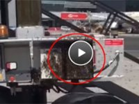 Doğayı katletmenin sonucu: Yeni Havalimanı'nı arılar bastı
