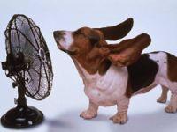 Çankırıda sıcaklar tatili getirdi!